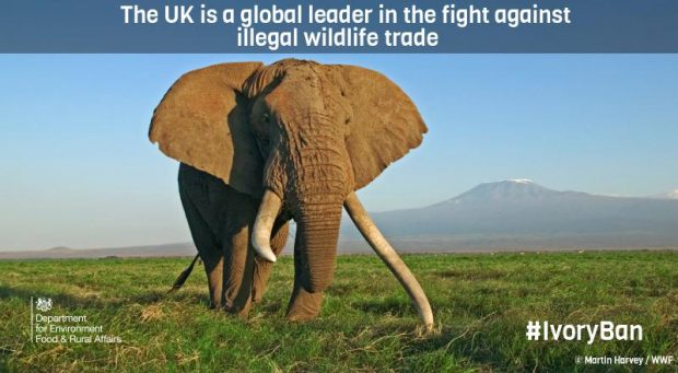 Graphic showing an elephant in Africa, with the statement 'The UK is a global leader in the fight against illegal wildlife trade'