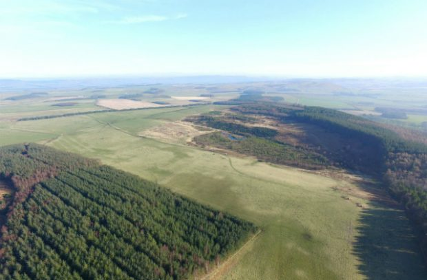 A picture, taken from above, which shows thousands of trees in Doddington North Moor.