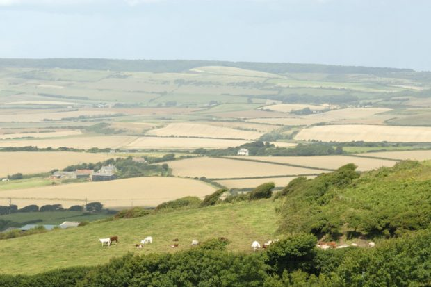 An image of farm land and corn fields with cattle in another field