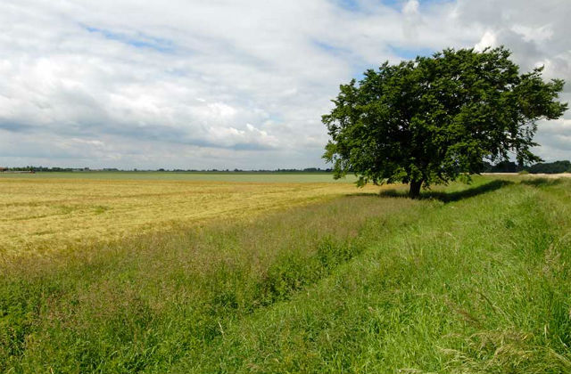 Image of a green field with a tree in the background and blue skies above.