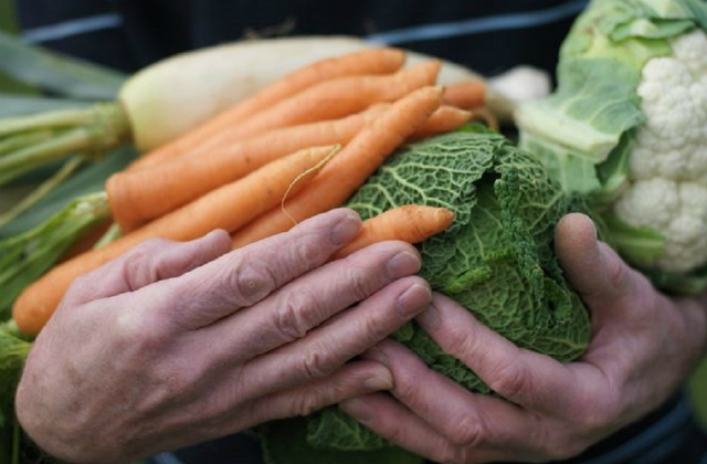 A close up image of hands holding carrots and cabbages.