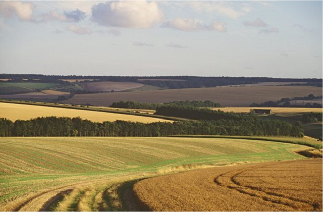 Fields and crop trees fill the picture, from the foreground to the horizon.