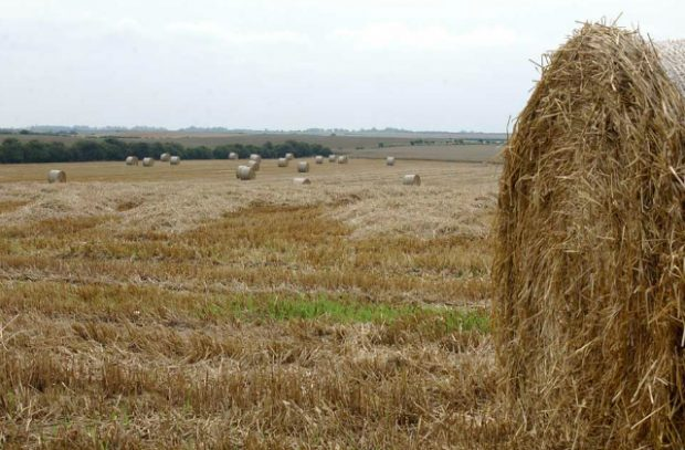 Large round bales of straw in a field