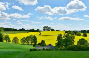 A green and yellow field.