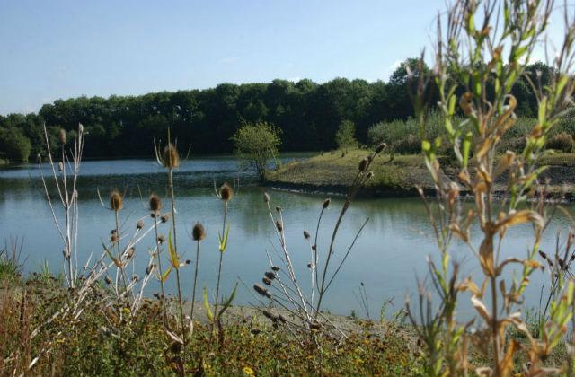 An image of a lake.