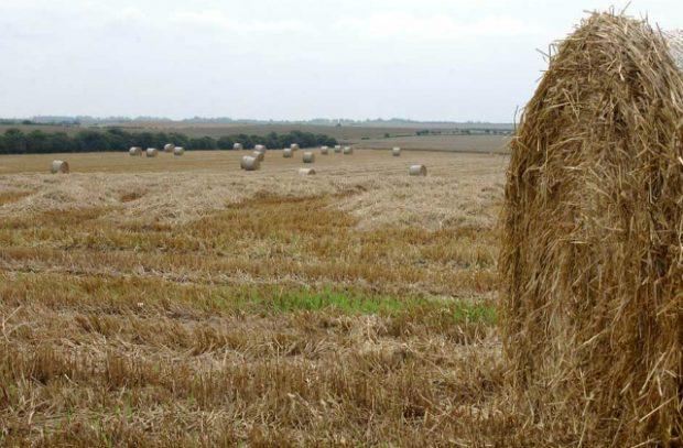 Crops in a field.