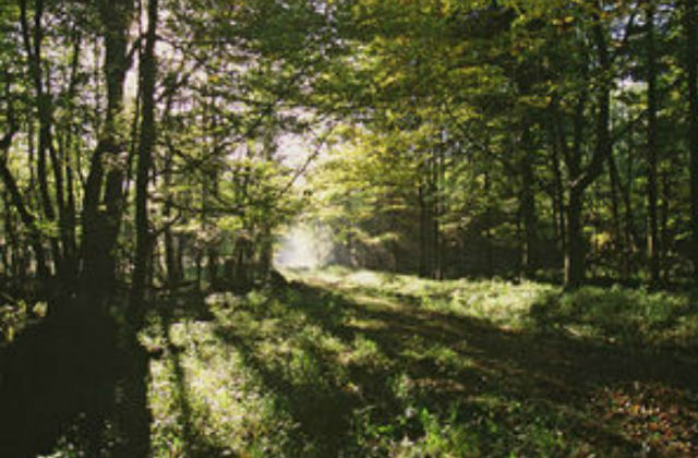 Image of a forest.