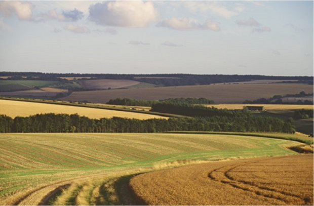 An image of farmland