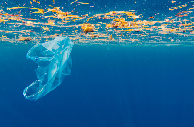 An underwater image of a plastic bag in the ocean.