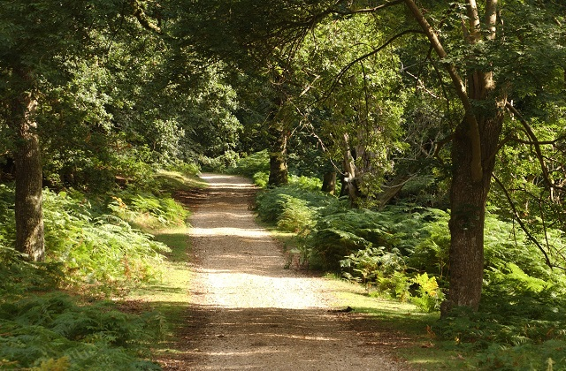 An image of a path through a wooded area.