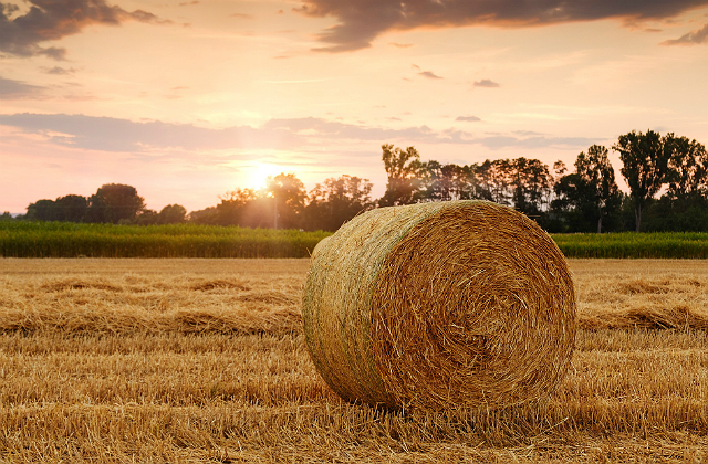 Image of a brown bale of straw in a field against a backdrop of a sunset.