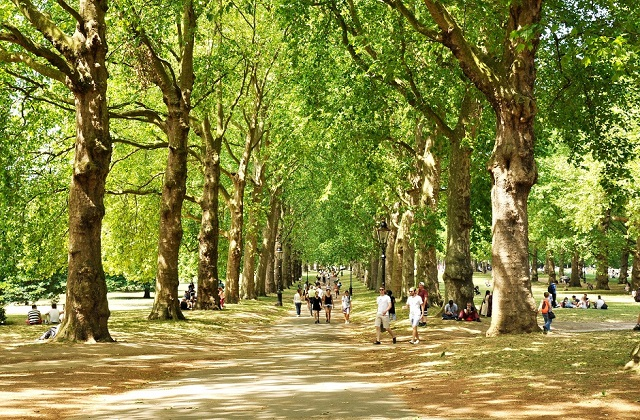 An image of an avenue in a park surrounded by trees.