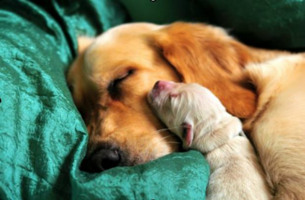 An image of a dog with a newborn puppy leaning against its cheek.