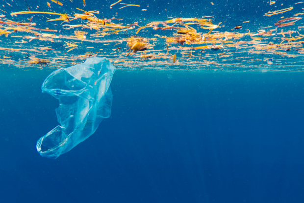 A plastic bag in the ocean surrounded by debris.