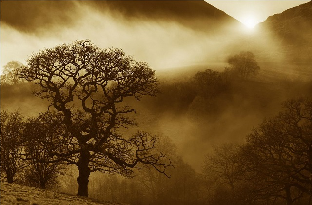 An image of an oak with the sun streaming through from above.