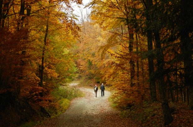 Two people walking down a path in the middle of a forest in autumn.