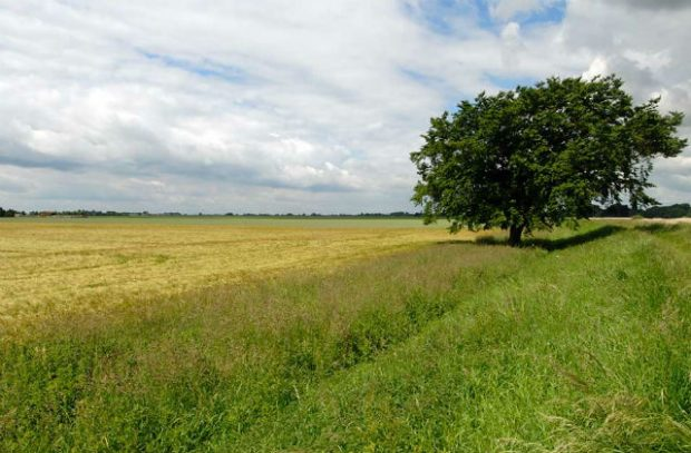 A green field with a tree in the background.