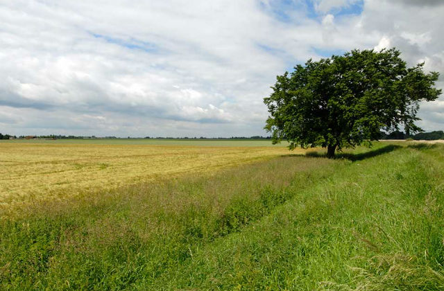 An image of a green field with a tree and the blue sky in the background.