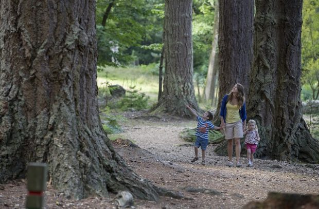 A photo of a family of three walking through a National Park looking up at the trees.