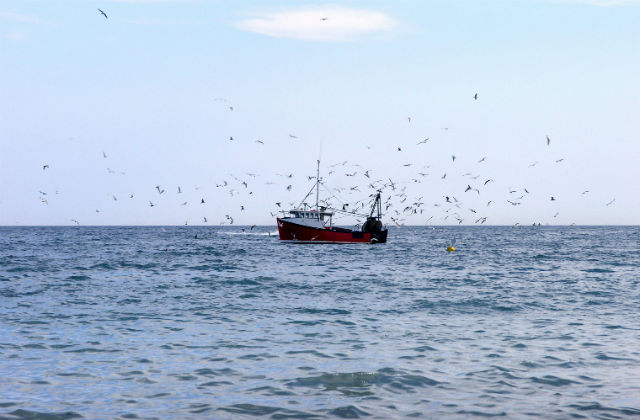 An image of a fishing boat in the ocean surrounded by birds.
