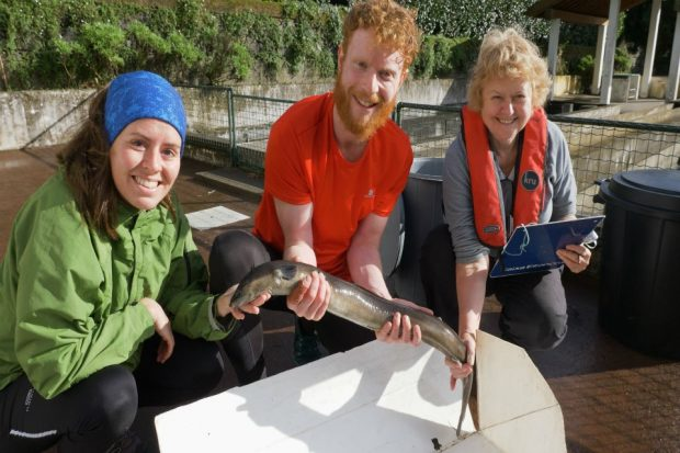 An image of Ros Wright, George Cowan and Sara Ramallo holding an eel.