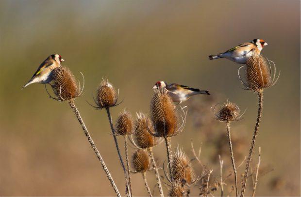 Image of farmland birds on a plant in a field.