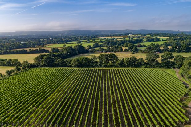Ridgeway Vineyard from the air