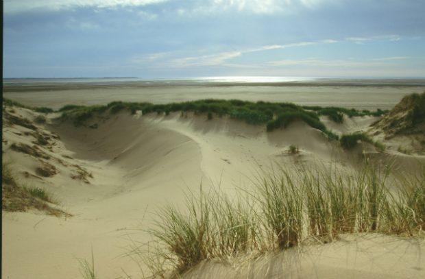 An image of a sand dune.