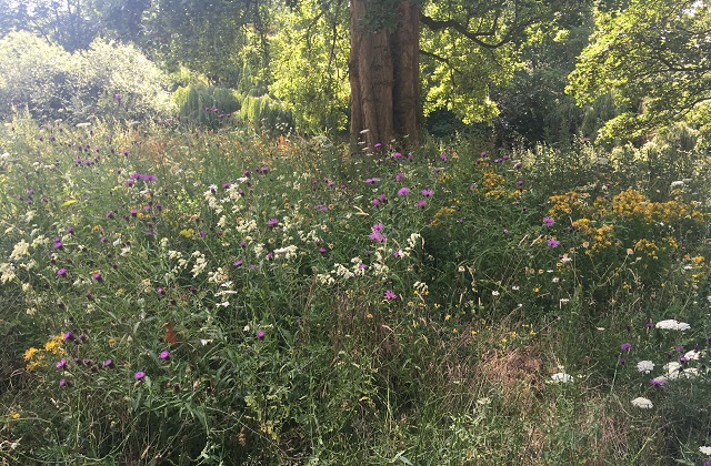 White, yellow and purple wildflowers in St James's Park, London, managed to help pollinating insects population numbers