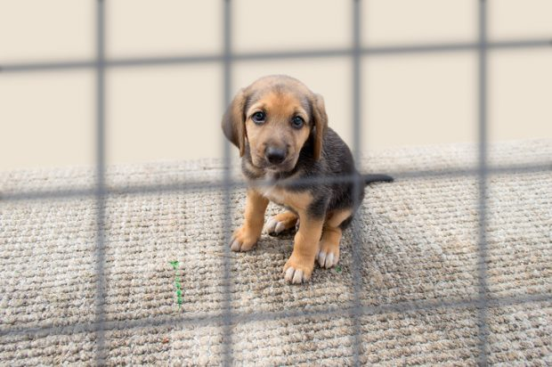 Image of brown and black puppy behind a cage