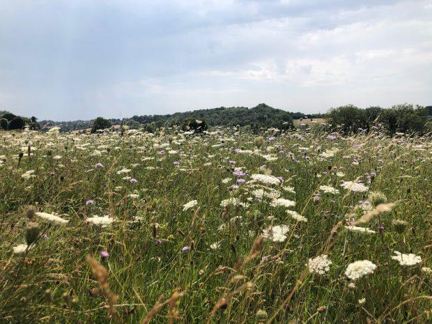 A meadow and skyline