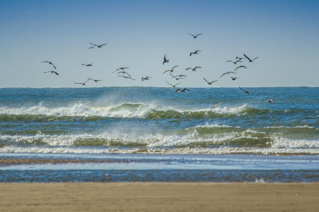 Gulls flying over the sea by the beach