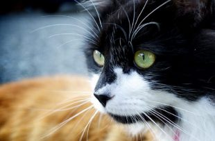 Black and white cat with green eyes.