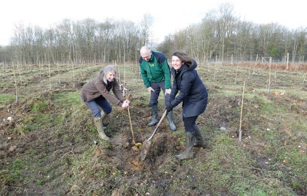 Chief Plant Health Officer plants the first ash dieback resistant tree in the new Ash Archive