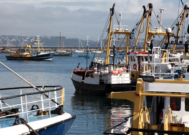 Fishing fleet in harbour