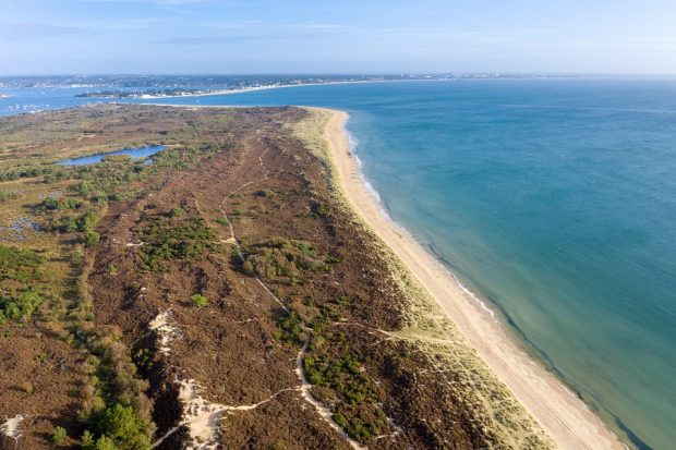 An aerial view of Studland Heath next to a sandy beach and blue water with blue water and