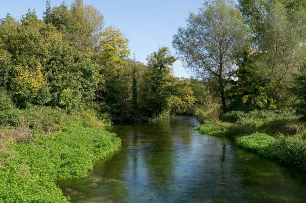 A river with green trees and bushes along the banks