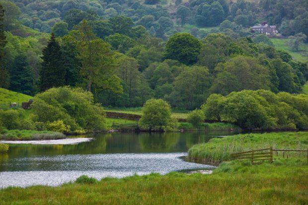 River flowing through grassy field