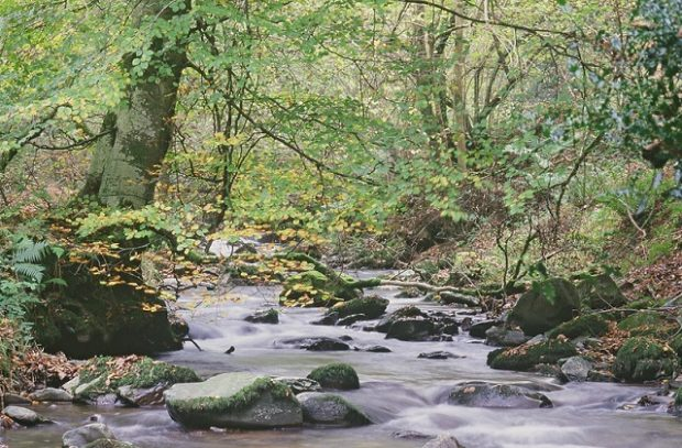 A small rocky stream in the woods