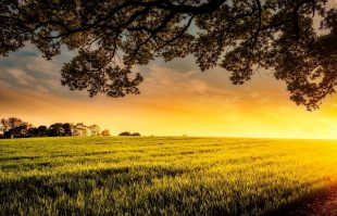 Image of a sunset over a green field
