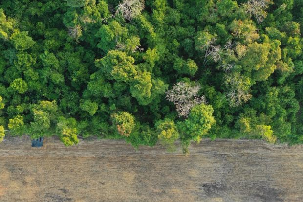 Trees from above showing deforestation