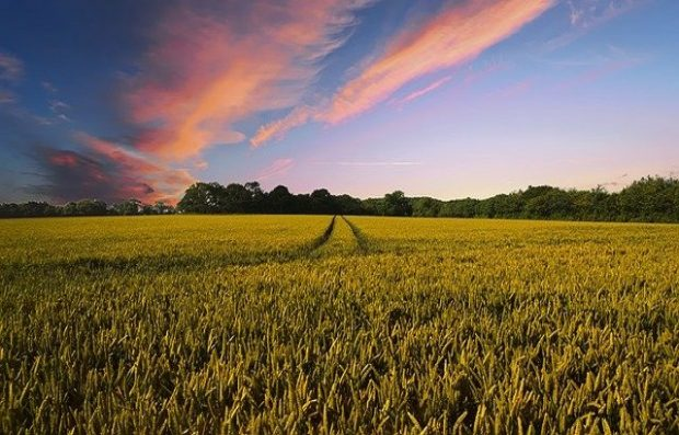Image of a field on a sunny afternoon