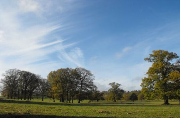 An image of trees at Fawsley Park, Northamptonshire