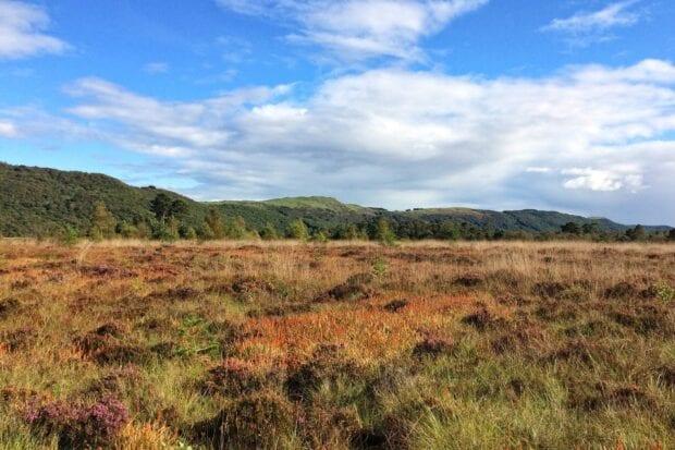 Roudsea lowland blog