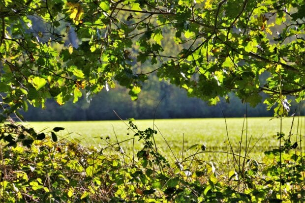 An image looking through some tree branches out onto a green field.