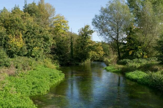 River through green banks and trees