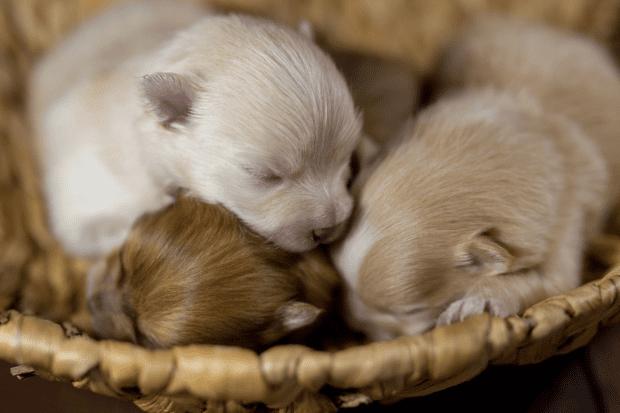 An image of newborn puppies