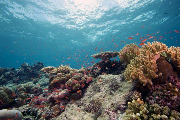 Underwater image of coral reef.